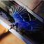 lifeofajaybird