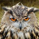 Profile photo of grumpyowl
