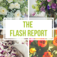 DV Flash Report