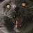 Cyborcat