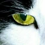 corduroycat