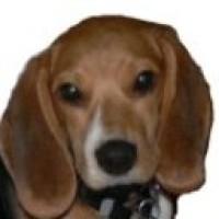 Beaglescout