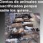 www.no-a-la-venta-de-animales.blogspot.com