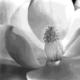 flowerofthesouth