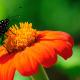 Silvia Guiffre