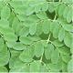 Moringa Guide