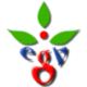 evergreenbangla