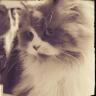 Rebe Miau