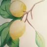 Un Citron Curieux