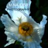 M.Najder