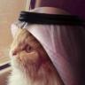 Tuxi Saudi Cat