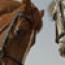 horsetradin