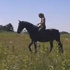 Experiment: natural tick repellent for horses  – Let the