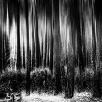 This Left Feels Right: Volterra | Fanfiction by Bertie Bott