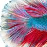 aquariumtips247