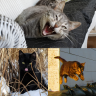 Homestead Prowlers