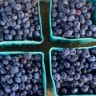 blueberrysmiles22