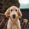 The Dog Training Blog