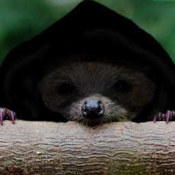 New cryptid on the block? | The Cloaked Hedgehog