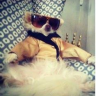 ardentdogfashionlover