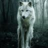 theempatheticwolf